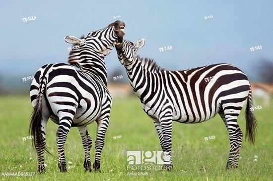 Photos de stock de vie sauvage. Images: règne animal, faune, espèce sauvage, mammifères, reptiles, oiseaux, faune marine, insectes