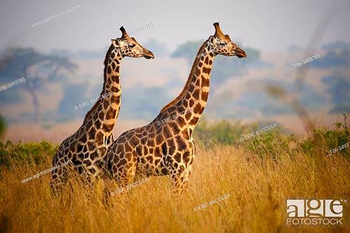 Fotos de animales de stock. Imágenes: reino animal, fauna, especies exóticas, mamíferos, reptiles aves fauna marina insectos