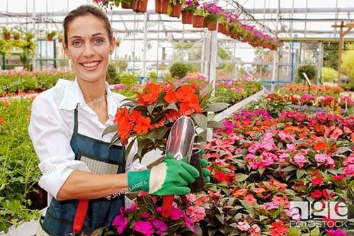 Banque d'images de jardinage, parcs, floriculture, images de stock d'horticulture, plantes, fleurs et cultures