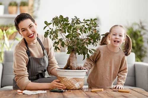 Banco de imágenes de jardinería, parques, floricultura, imágenes de stock en horticultura, plantas, flores y cultivos