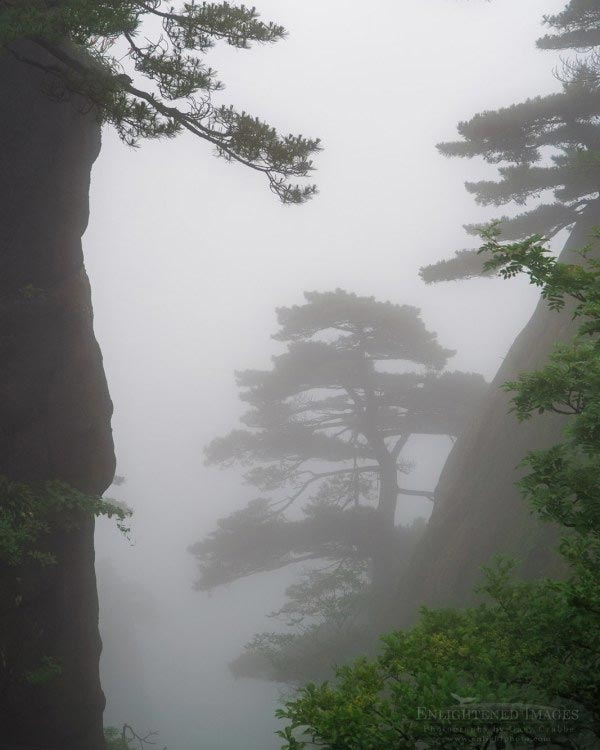 Pine trees, cliffs, and fog in the Yellow Mountains of the Huangshan Scenic Area, Huangshan, China
